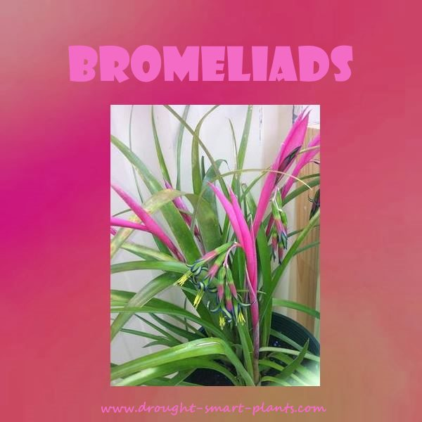 Bromeliads - odd and unusual jungle plants