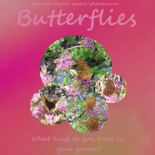 Beautiful butterflies - I want more!