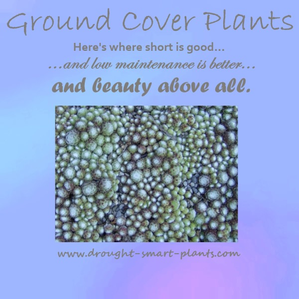 Ground Cover Plants...