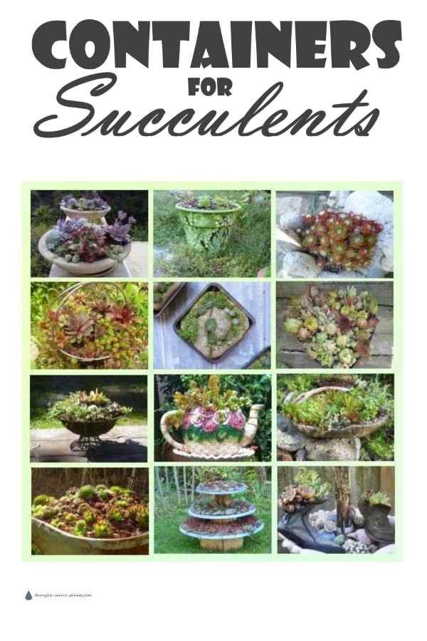 Containers for Succulents...