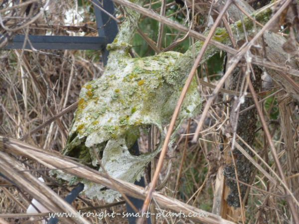 Skulls are intricate and lovely - especially covered in lichen