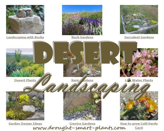 Desert Landscaping - see the beauty in dry gardens...