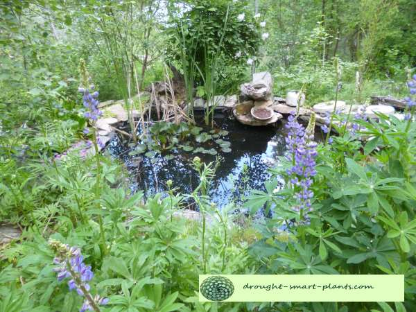 Lush and summer drowsy with lupins around and about the pond is secretive and mysterious...