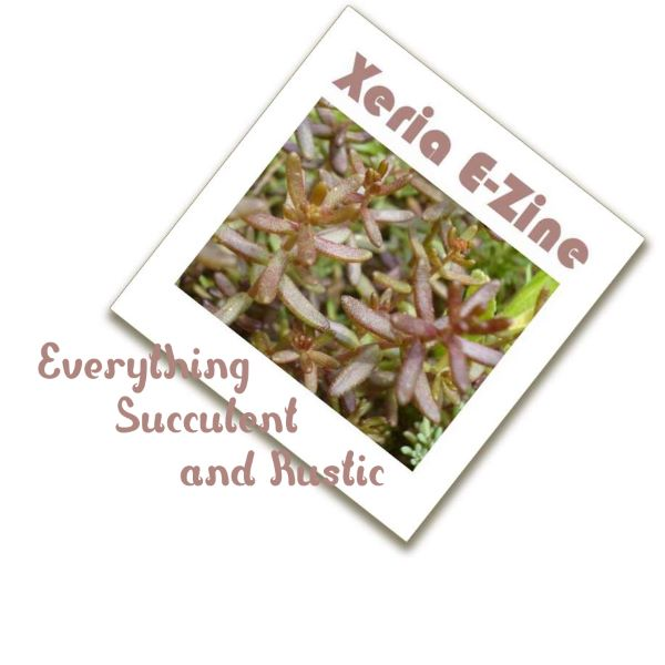 Succulents and Rustic - Xeria E-Zine August 2014