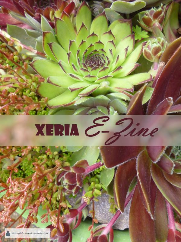 Xeria E-Zine - the best way to stay in touch...
