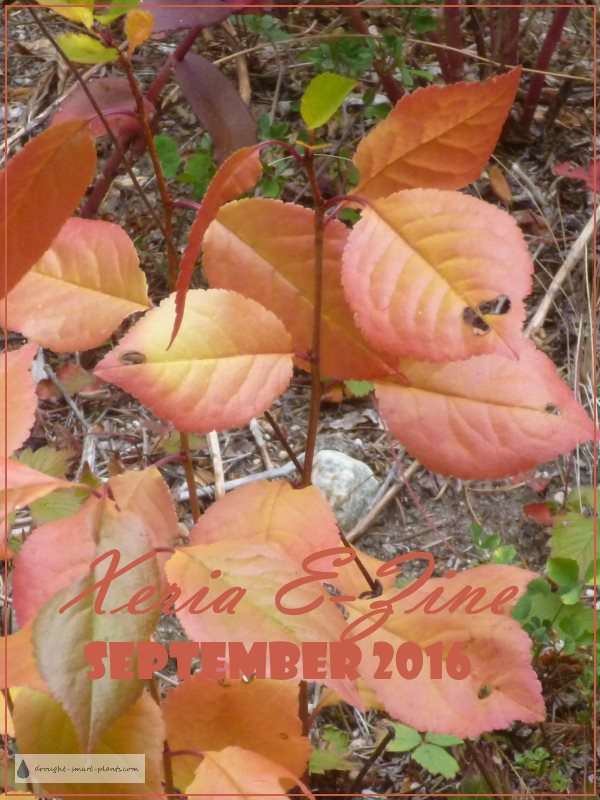 Xeria E-zine September 2016