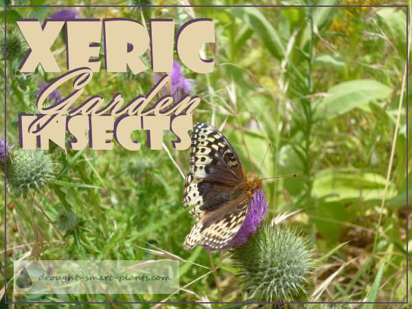 Xeric Garden Insects