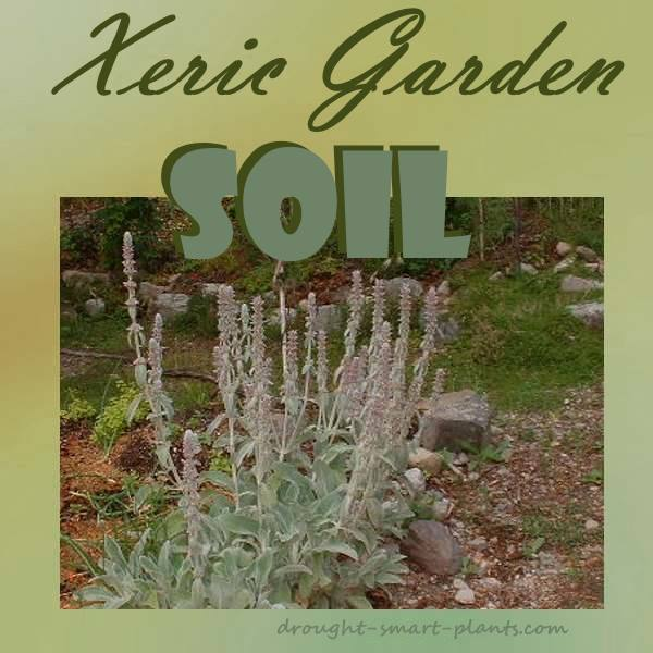 Xeric garden soil soil types or how to improve on nature for Garden soil meaning