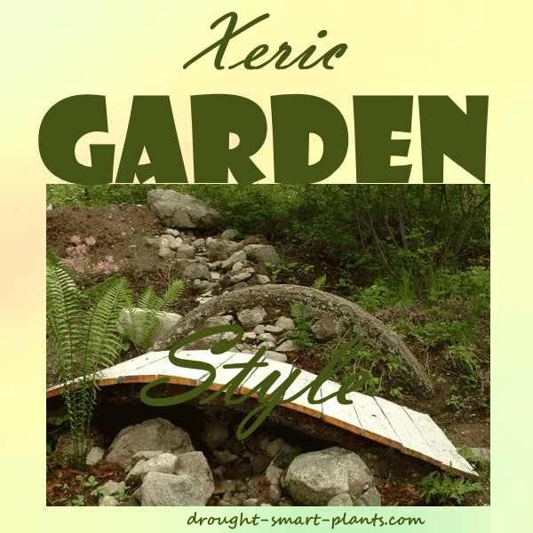 drought planting pond waterfall ideas xeric garden style blend your personal style and the way you