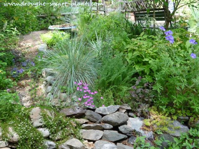 Grasses, succulents and perennials combine and support each other...