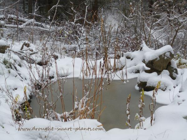 Equally beautiful, in a pared down way, in the winter...see more about the Xeriscape in Winter...