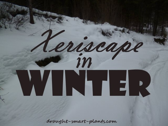 The Xeriscape in Winter