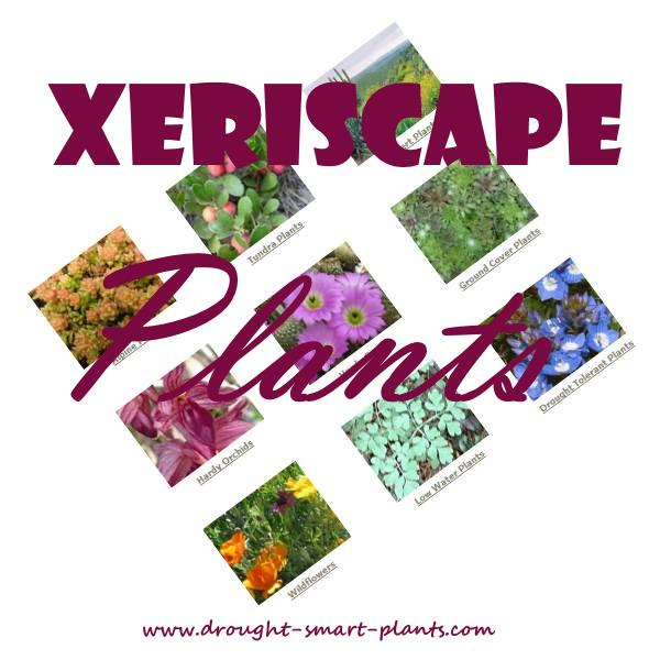 Xeriscape Plants - drought tolerant and tough