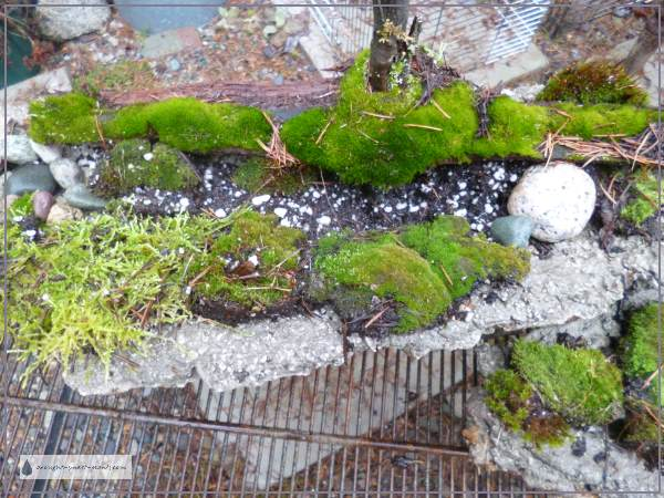 Moss is an unusual 'plant'...