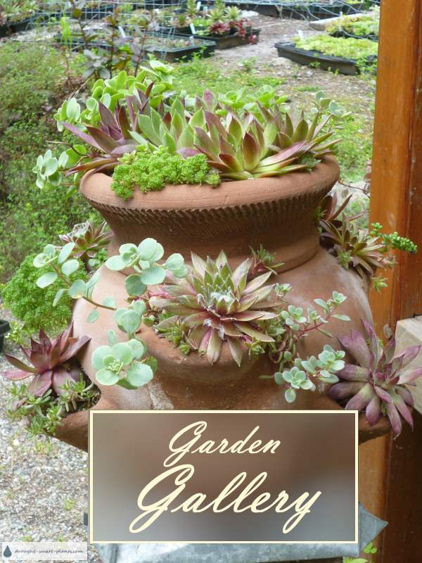 Rustic Terracotta Strawberry Pot