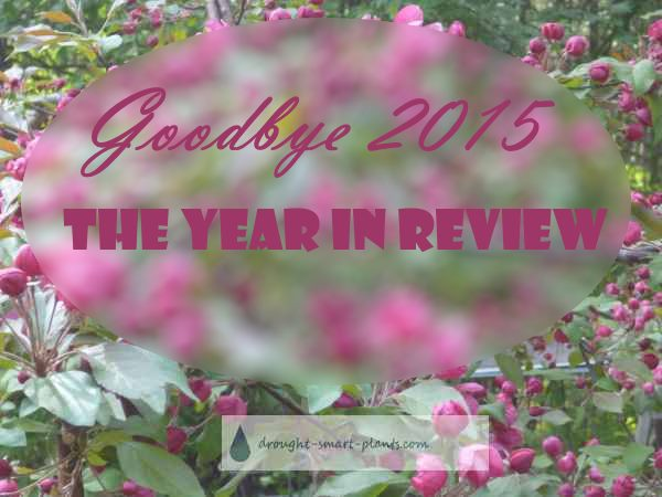 Goodbye 2015 - looking back at the year...