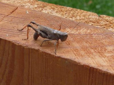 grasshopper waiting for lunch