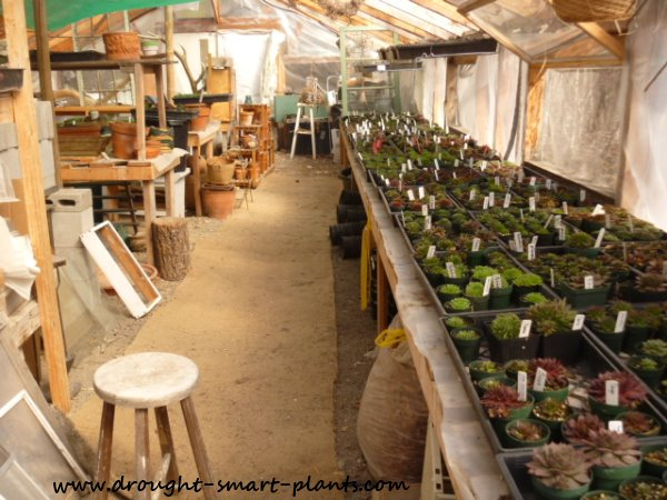 My Greenhouse - lots of activity happens in here...