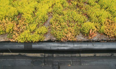 Green Roof Sedum - the components that make up the understructure are just as important