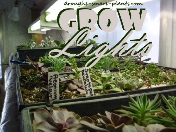 Grow Lights - your succulents need light too...
