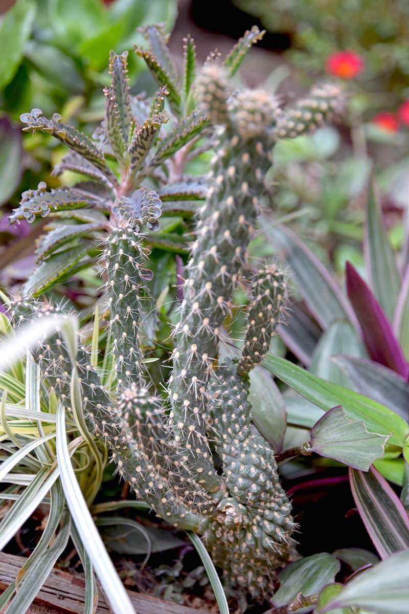 Keep Plants Healthy by Watering Correctly