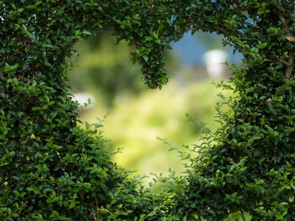 Heart Shaped Hole in a Hedge