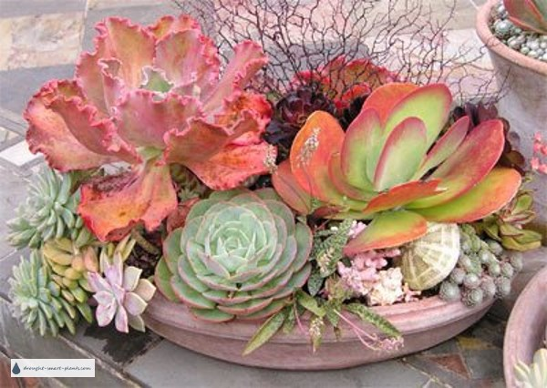 Mixed planter of succulents with coral and shells