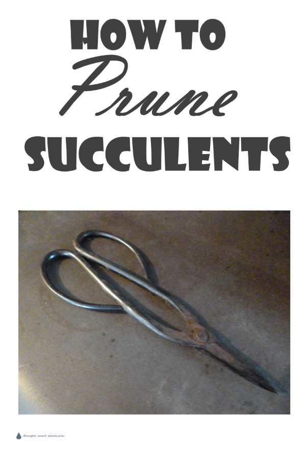 How To Prune Succulents...