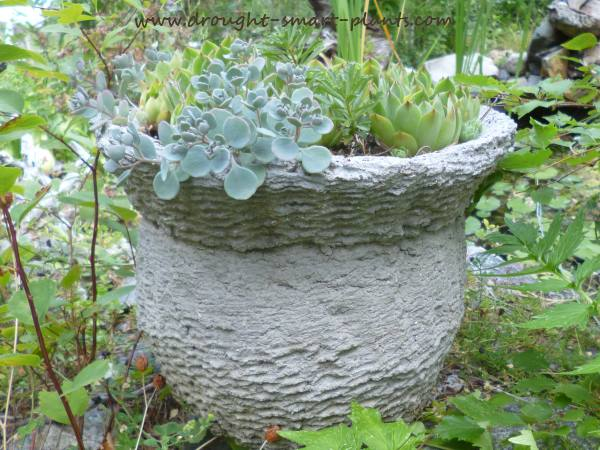 Nothing goes to waste around here...even old baskets have value as a mold for hypertufa...find out more here...