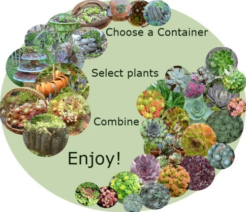 Containers for Succulents, and the plants to go in them