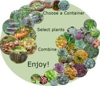 Containers for Succulents - find out more here...