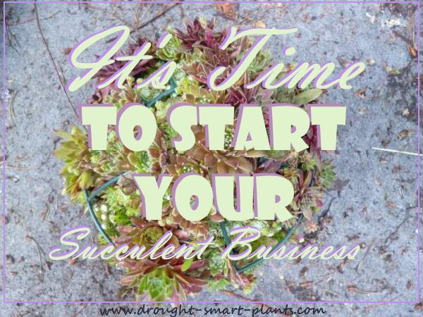 It's Time To Start Your Succulent Plant Business