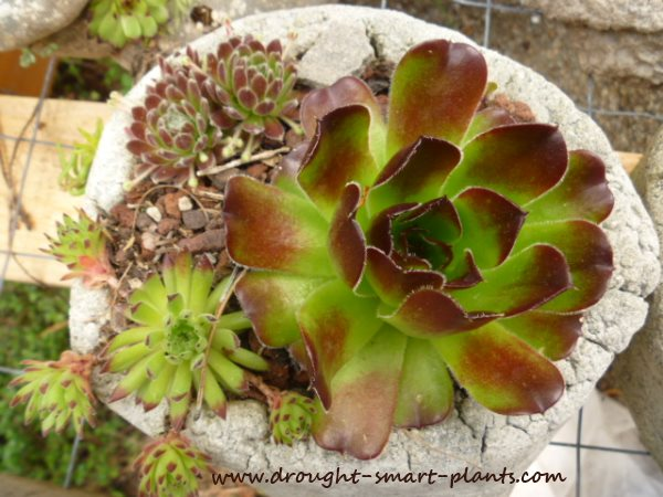 Enroll now in the Succulent Crafts E-Course - 12 installments of unique and unusual crafts, full tutorials