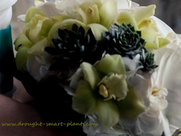 Painted succulents and Catteleya orchids...