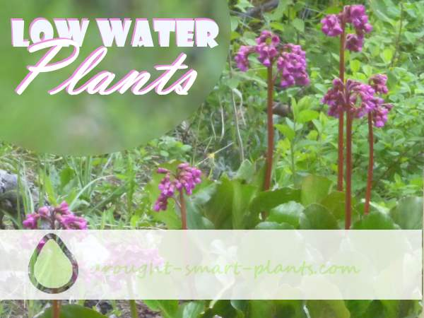 Low Water Plants thrive in droughty conditions...