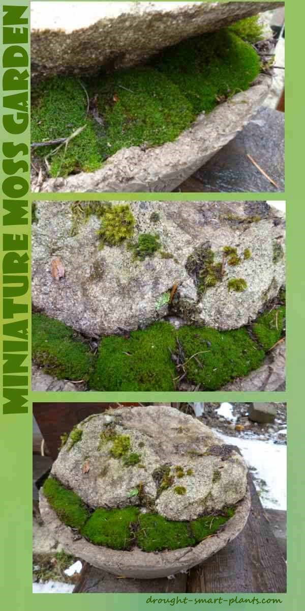 Miniature japanese garden a bowl some moss and a rock for Miniature japanese garden