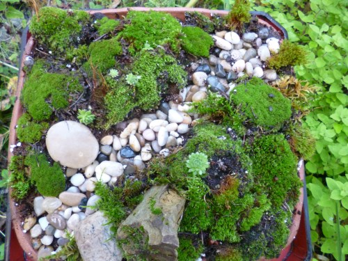 Who would have thought only a few rocks and a bit of moss could look so good?