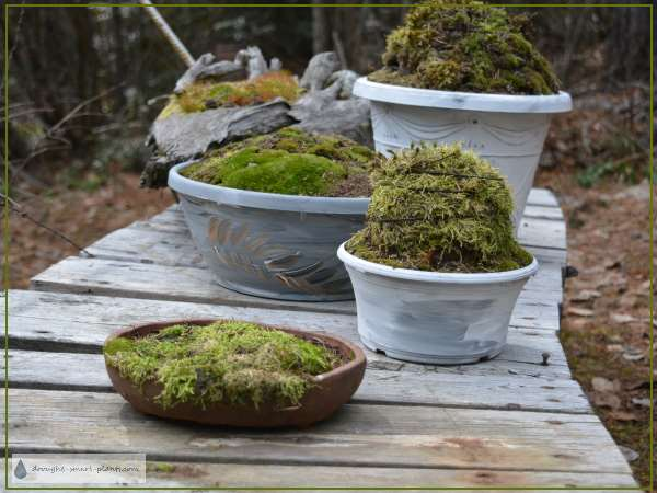 Collection of Moss Topiaries