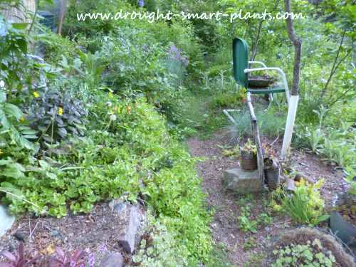 Hardy perennials are protected by the lush growth of many ground covers
