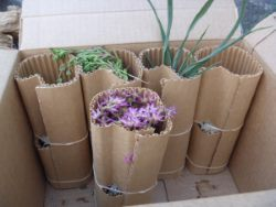 Packing Succulent Plants in Pots