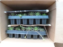 Packing succulents for shipping