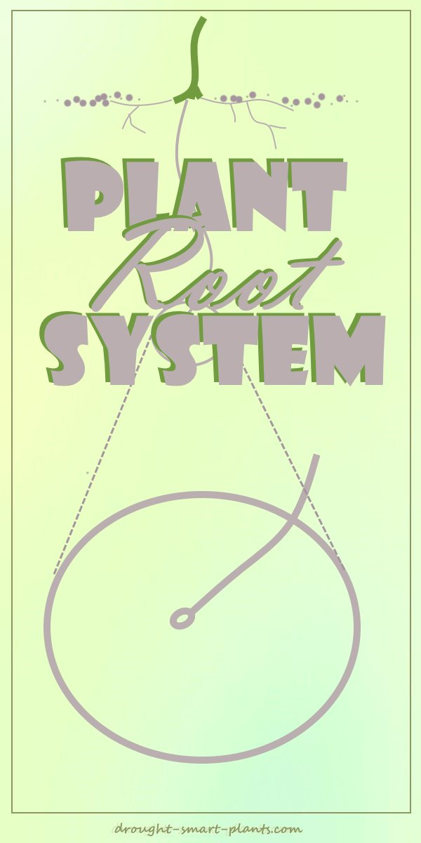 Plant Root System