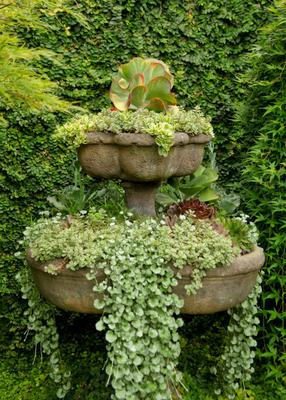 Fountain of Succulents