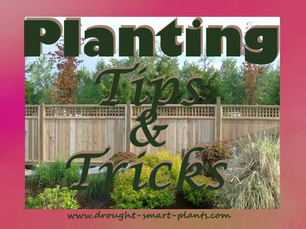 Planting - Tips and Tricks