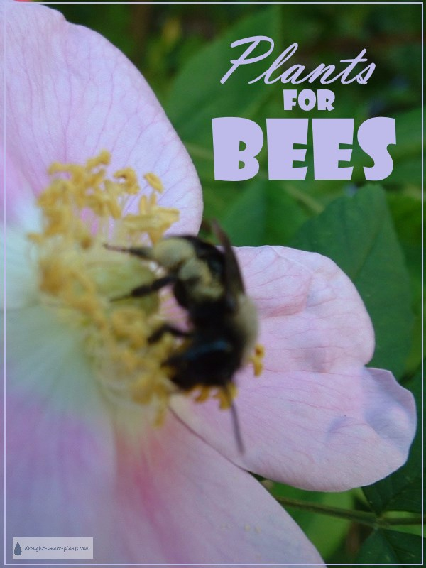 Plants for Bees - plant some!