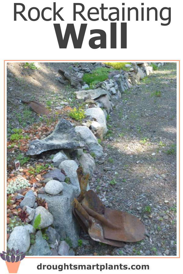 Rock walls are perfect for planting with hardy succulents, which love the drainage...