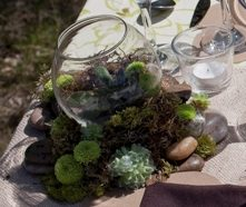 Moss and succulents