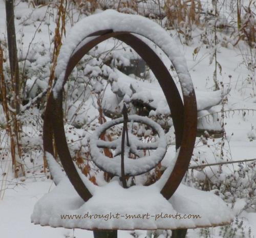 See more about the Xeriscape in Winter here...
