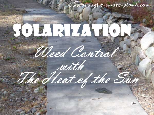 Solarization - Use the Heat of the Sun to Control Weeds