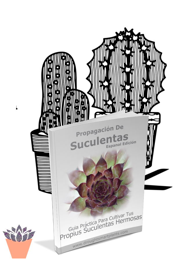 Succulent Plant Propagation How-To Guide, Revised Edition - Grow Your Own Beautiful Succulents!